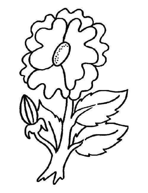 Раскраска  Маргаритка и листья. Скачать листья.  Распечатать листья