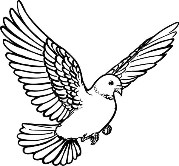 Раскраска  голубь летит, голубь крыльями машет. Скачать Голубь.  Распечатать Голубь