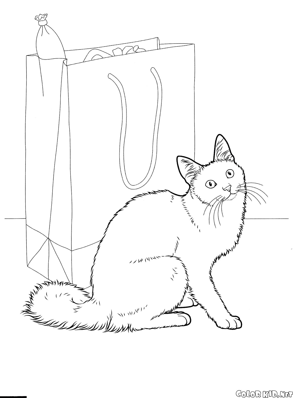 Раскраска Ангорская кошка. Скачать кошка.  Распечатать кошка
