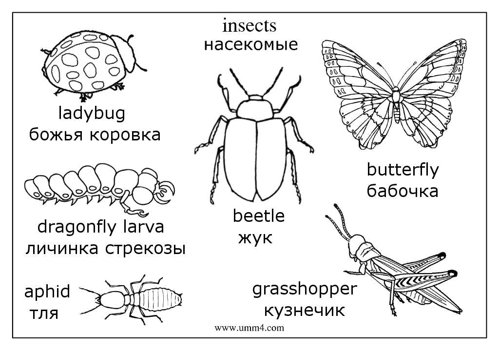 Раскраска  насекомые,  жук,  бабочка,  муха,  кузнечик,  гусеница,  комар,  оса, насекомые на английском языке. Скачать Жук, Кузнечик, Гусеница, Божья коровка.  Распечатать Насекомые