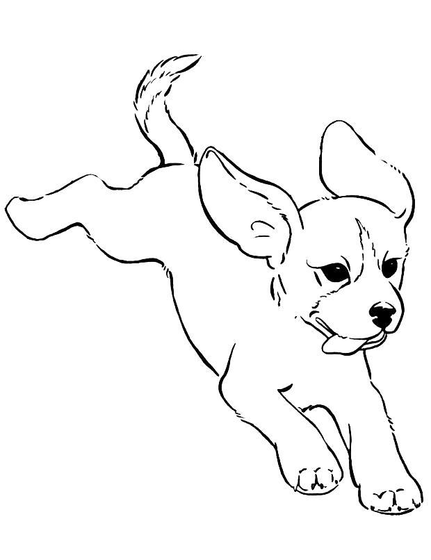 Раскраска  щенок смешной. Скачать Собаки.  Распечатать Собаки