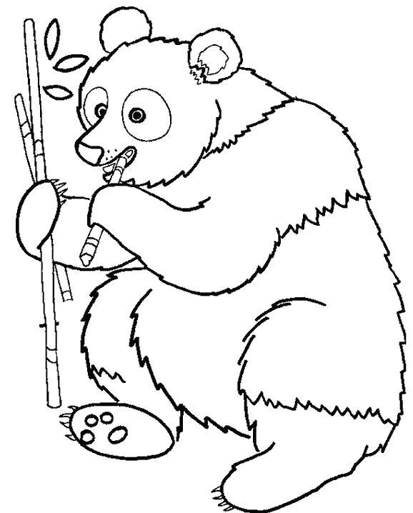 Раскраска панда кушает веточку дерева. Скачать Панда.  Распечатать Дикие животные