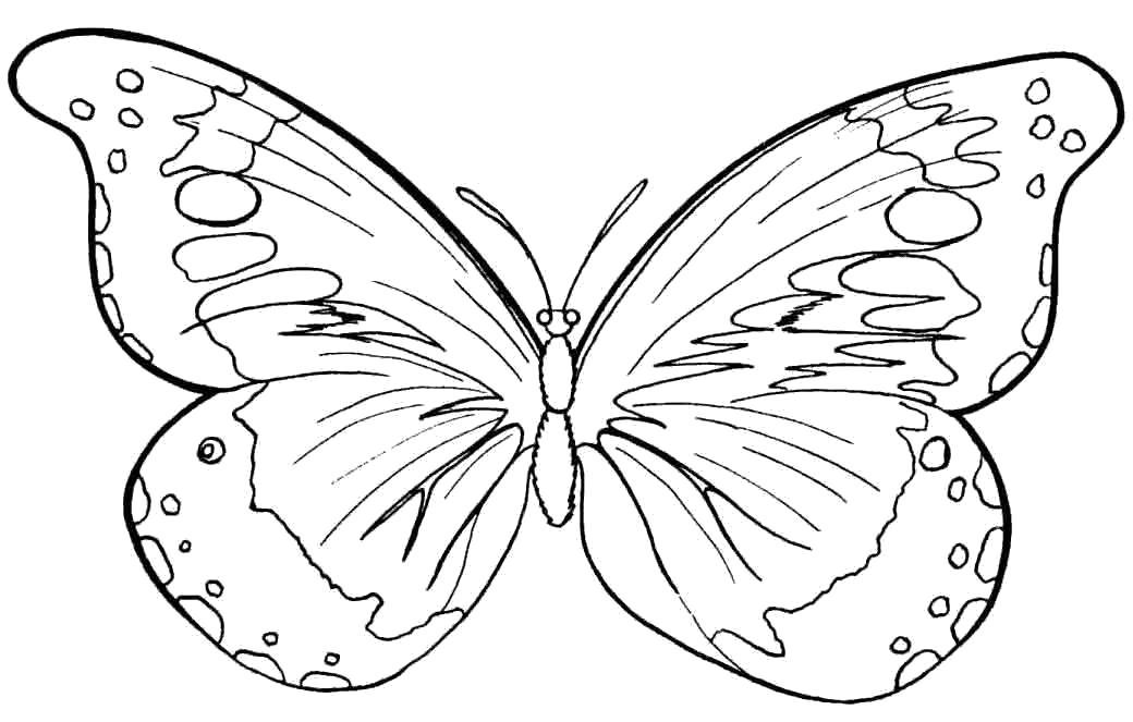 Раскраска бабочка. Скачать Бабочки.  Распечатать Бабочки