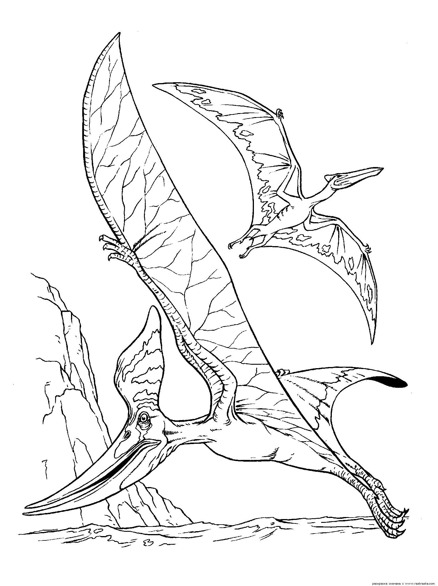 Раскраска  Птеранодон и птеродактиль.  Летающие ящеры, ужасный динозавры в картинках для детей. Скачать динозавр.  Распечатать динозавр