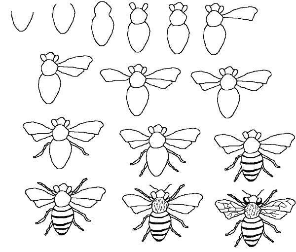 Раскраска пчела карандашом. Скачать Как нарисовать.  Распечатать Как нарисовать