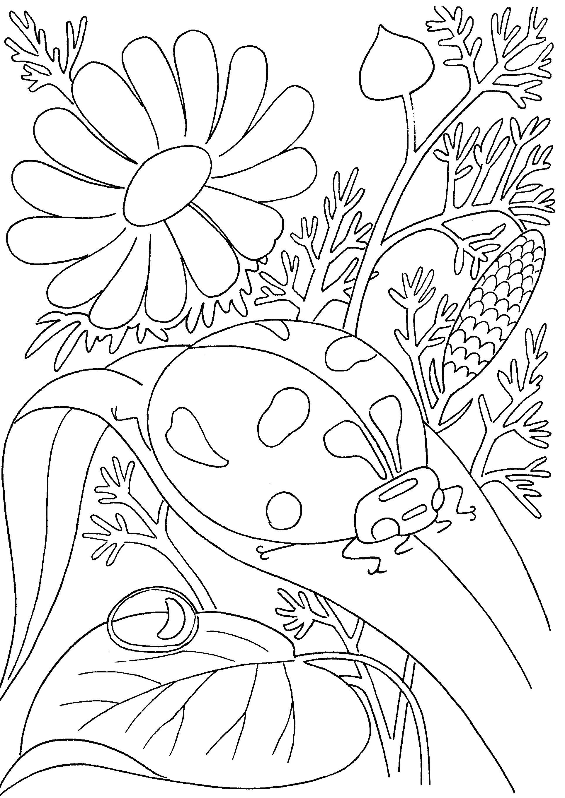 Раскраска  божья коровка на листочке в цветах . Скачать листья, цветы.  Распечатать растения