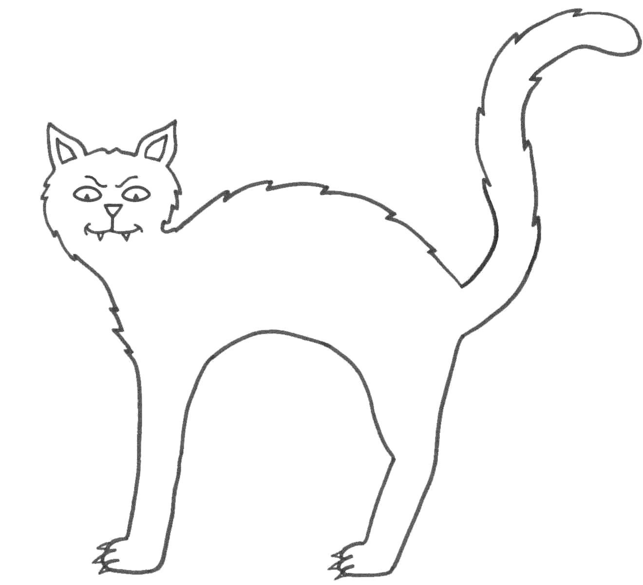 Раскраска  дикая кошка. Скачать кошка.  Распечатать Домашние животные