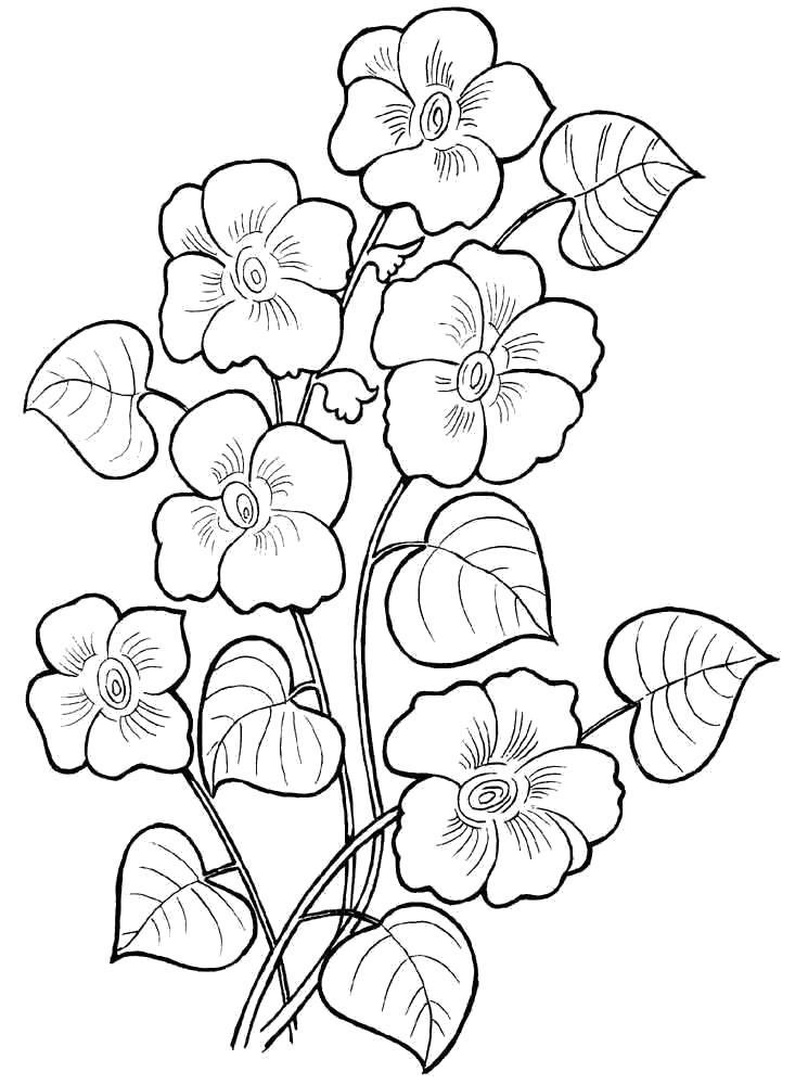 Раскраски цвет, Страница:33.