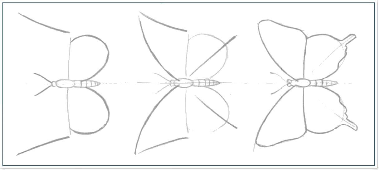 Раскраска как нарисовать бабочку поэтапно. Скачать Бабочки.  Распечатать Бабочки