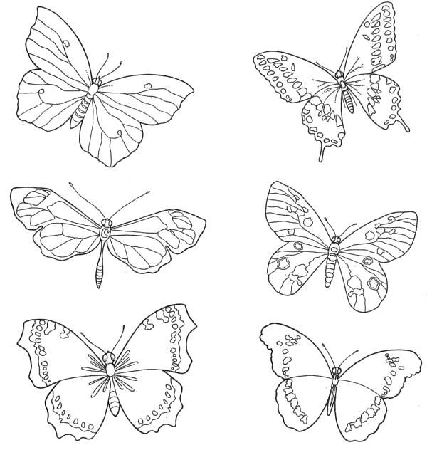 Раскраска много бабочек. Скачать Бабочки.  Распечатать Бабочки