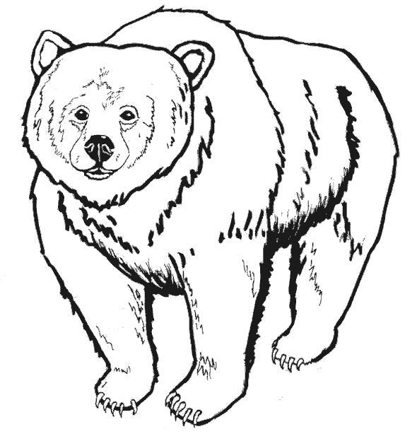 Раскраска Медведь гризли. Скачать Мишка.  Распечатать Мишка