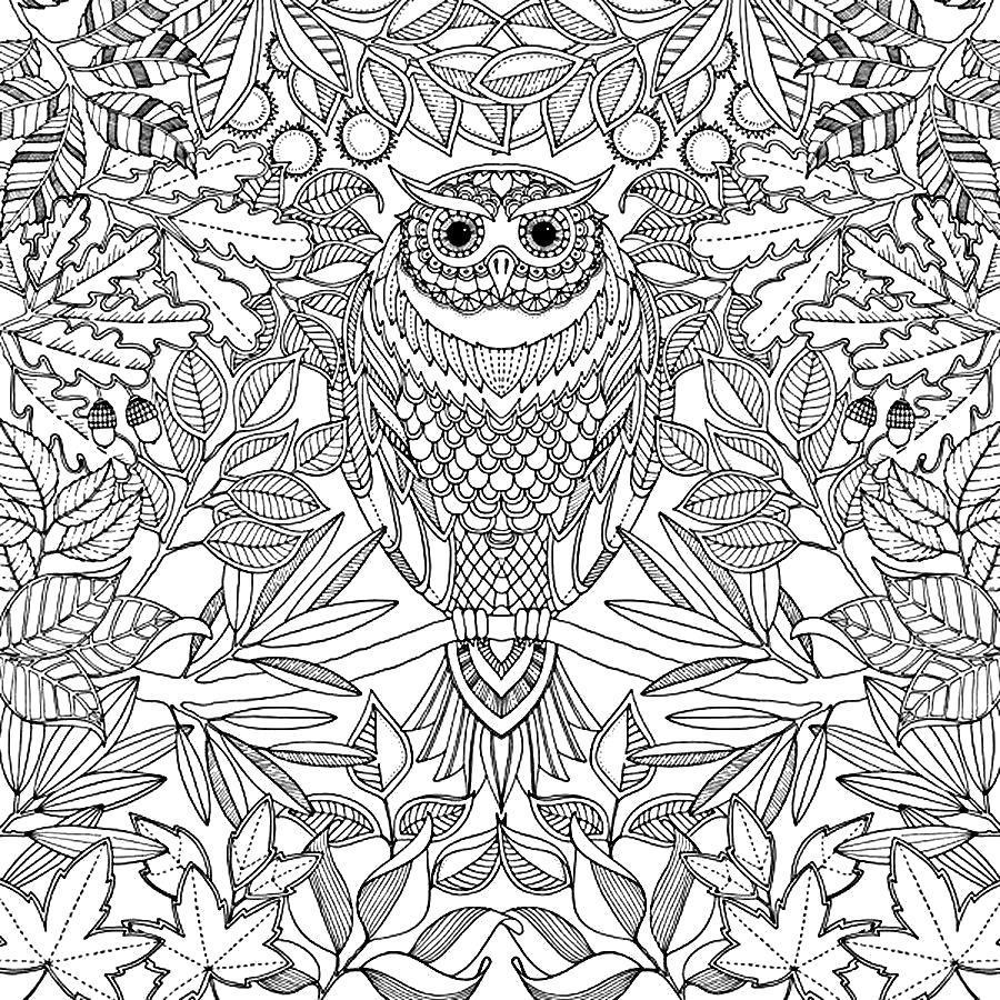 Раскраска Антистресс сова. Скачать .  Распечатать