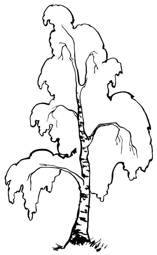 Раскраска березовое дерево. Скачать береза.  Распечатать береза