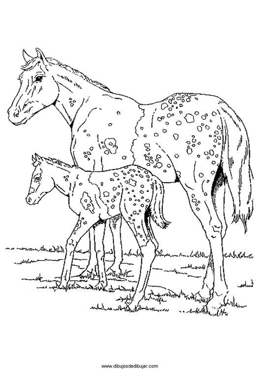 Раскраска  Лошади пятнистая лошадка, жеребенок, , лошади. Скачать Лошадка.  Распечатать Лошадка