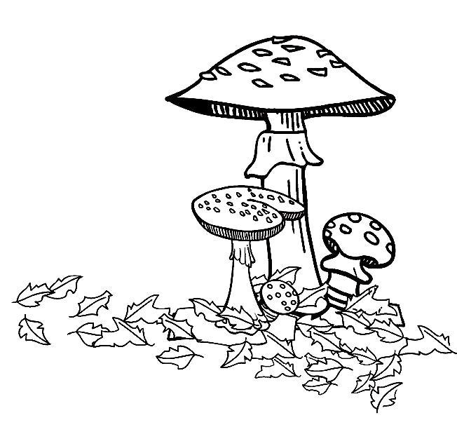 Раскраска  осень, грибы, мухоморы . Скачать гриб.  Распечатать растения