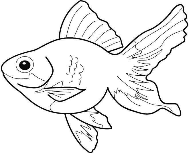 Раскраска Золотая рыбка. Скачать рыба.  Распечатать рыба