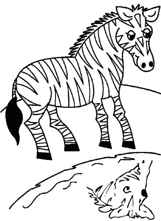 Раскраска  зебра зебра, вода, природа,  для детей. Скачать зебра.  Распечатать Дикие животные