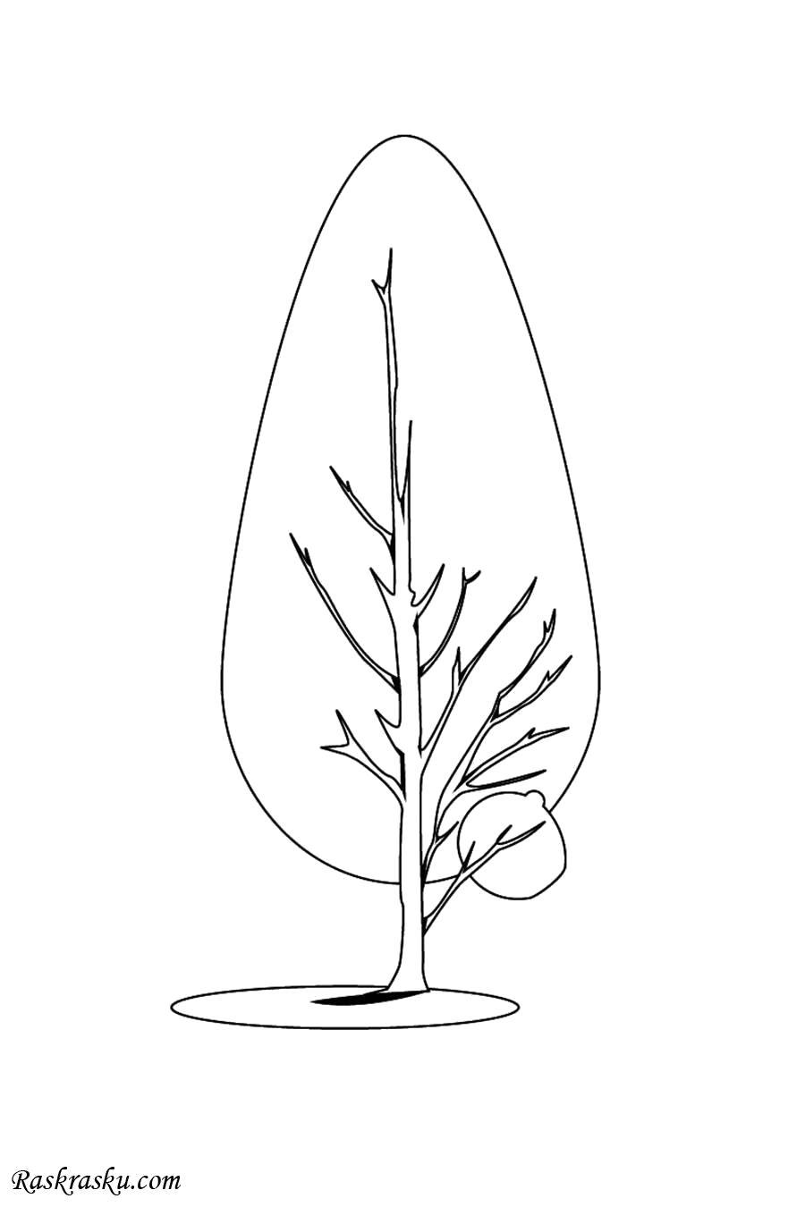 Раскраска Сосна. Скачать деревья.  Распечатать деревья