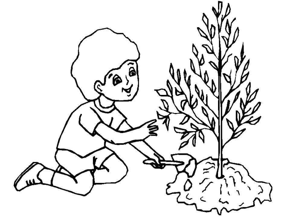 Раскраска  Ребенок сажает дерево. Скачать растения.  Распечатать растения