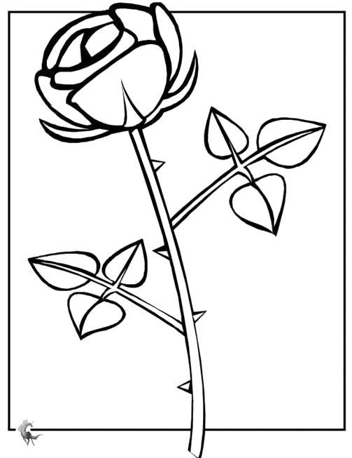 Раскраска контуры рисунков цветов. Скачать Контур.  Распечатать Контур
