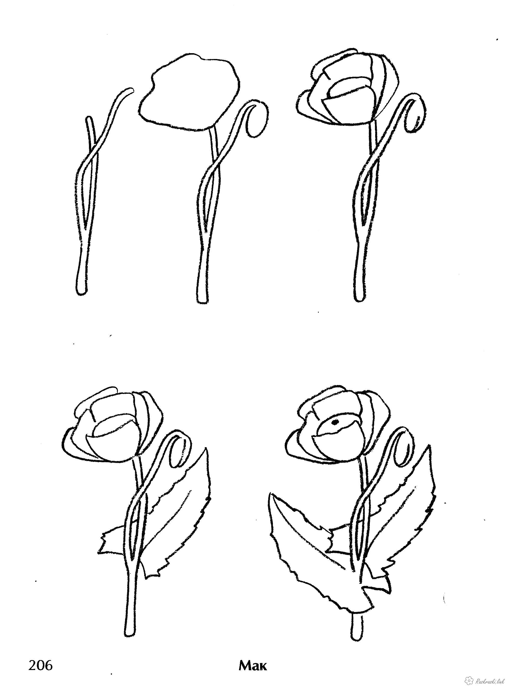Раскраска  Как нарисовать как нарисовать мак. Скачать как нарисовать.  Распечатать Учимся рисовать