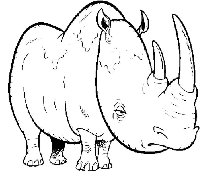 Раскраска Грустный носорог . Скачать Носорог.  Распечатать Дикие животные