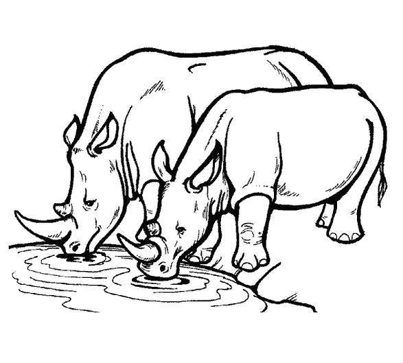 Раскраска носороги пьют воду. Скачать Носорог.  Распечатать Дикие животные