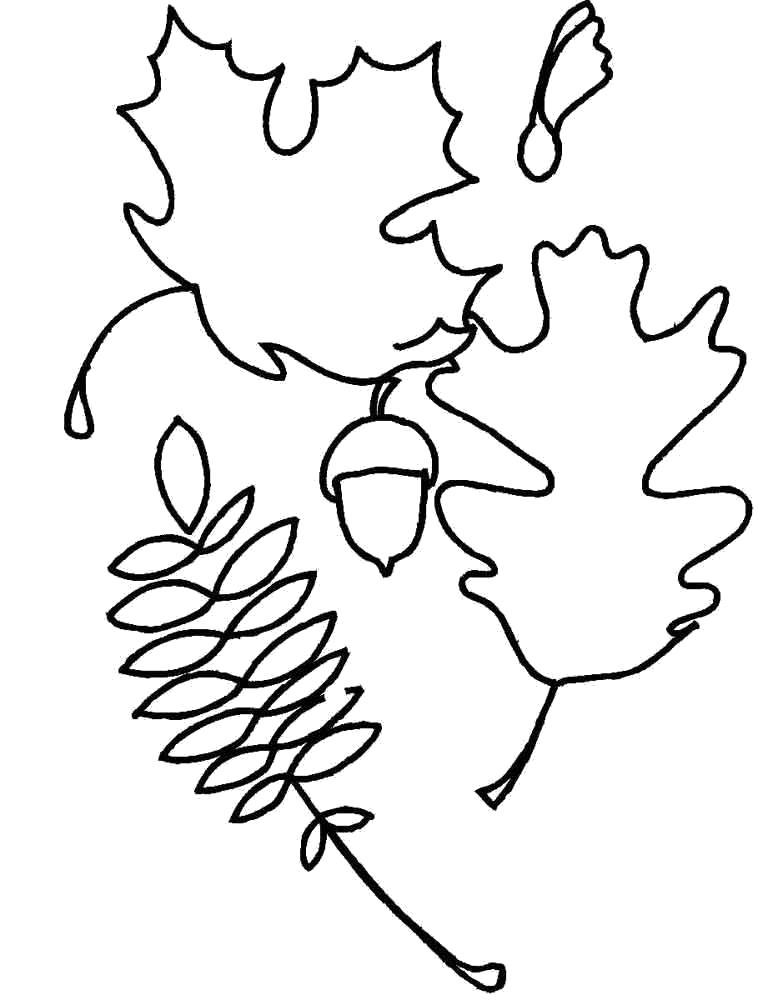 Раскраска рябина дуб клен. Скачать лист.  Распечатать лист