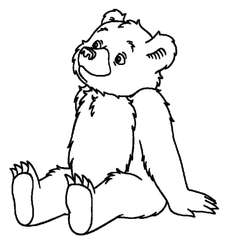 Раскраска Медведь. Скачать животных.  Распечатать животных