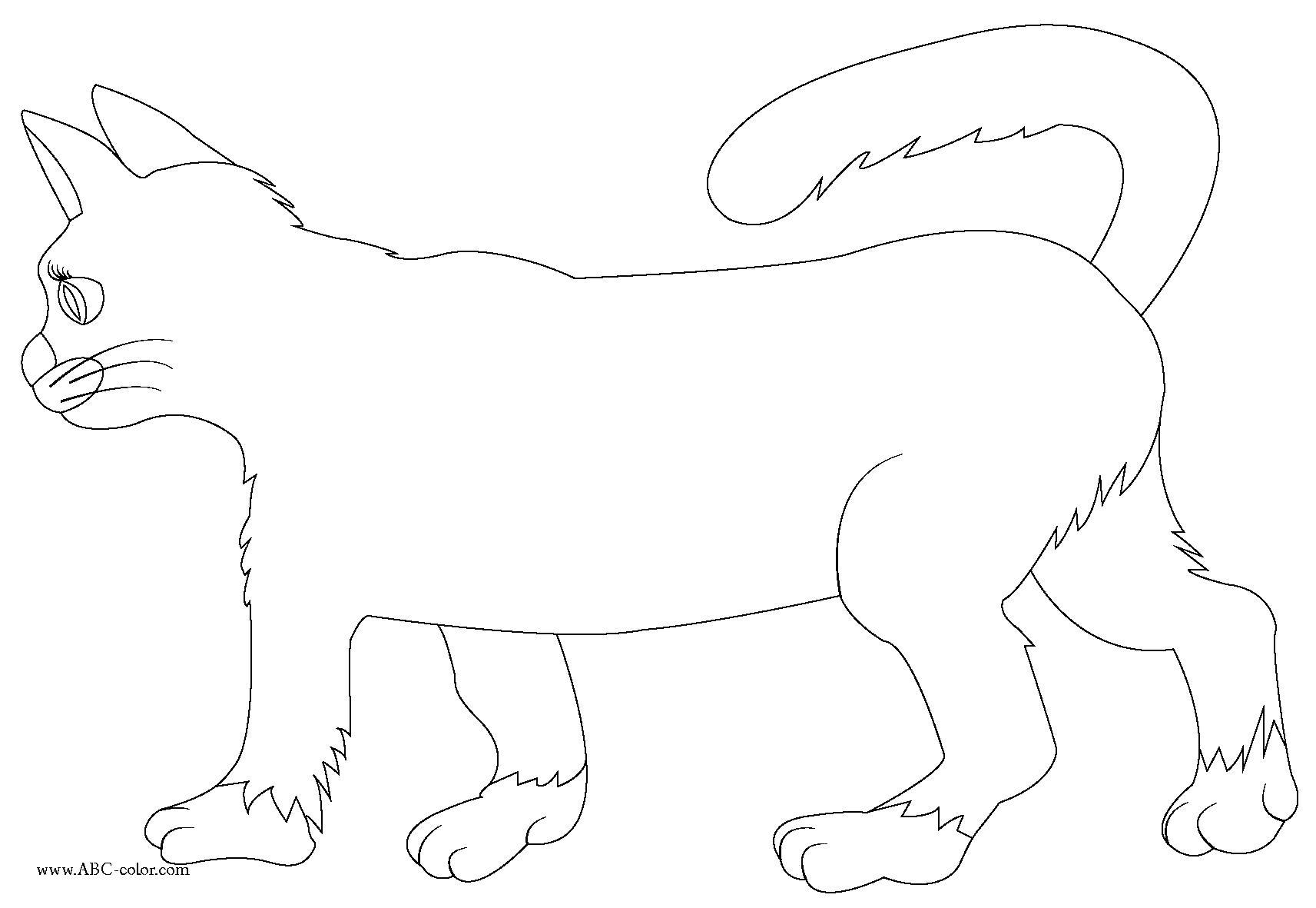 Раскраска кошка , красивая кошечка. Скачать кошка.  Распечатать кошка