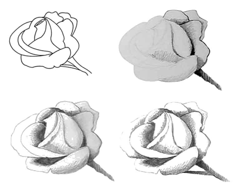 Раскраска Рисование Роза. Скачать .  Распечатать