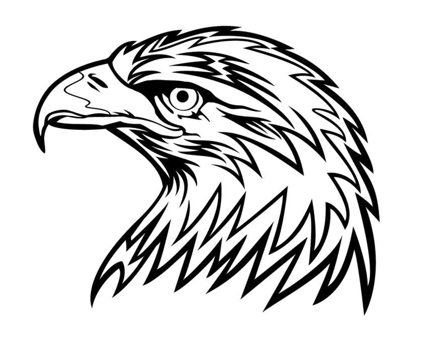 Раскраска орел . Скачать .  Распечатать