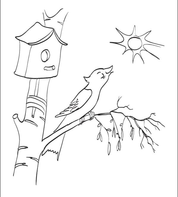 Раскраска Птичка поет на березке. Скачать Весна.  Распечатать Весна
