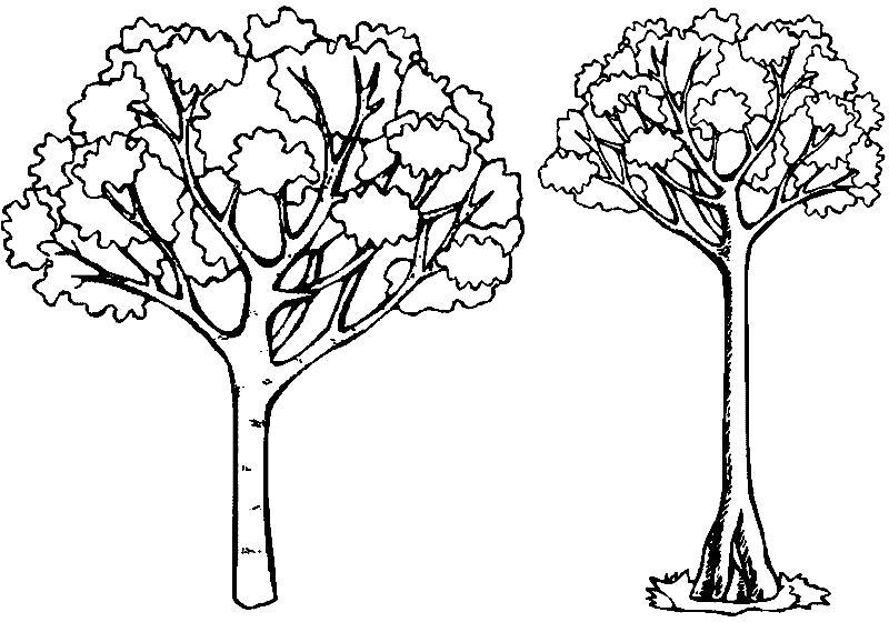 деревья для раскрашивания детям комплект чепчику