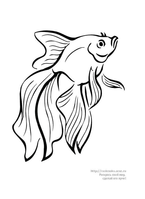 Раскраска Красивая золотая рыбка, . Скачать золотая рыбка.  Распечатать золотая рыбка