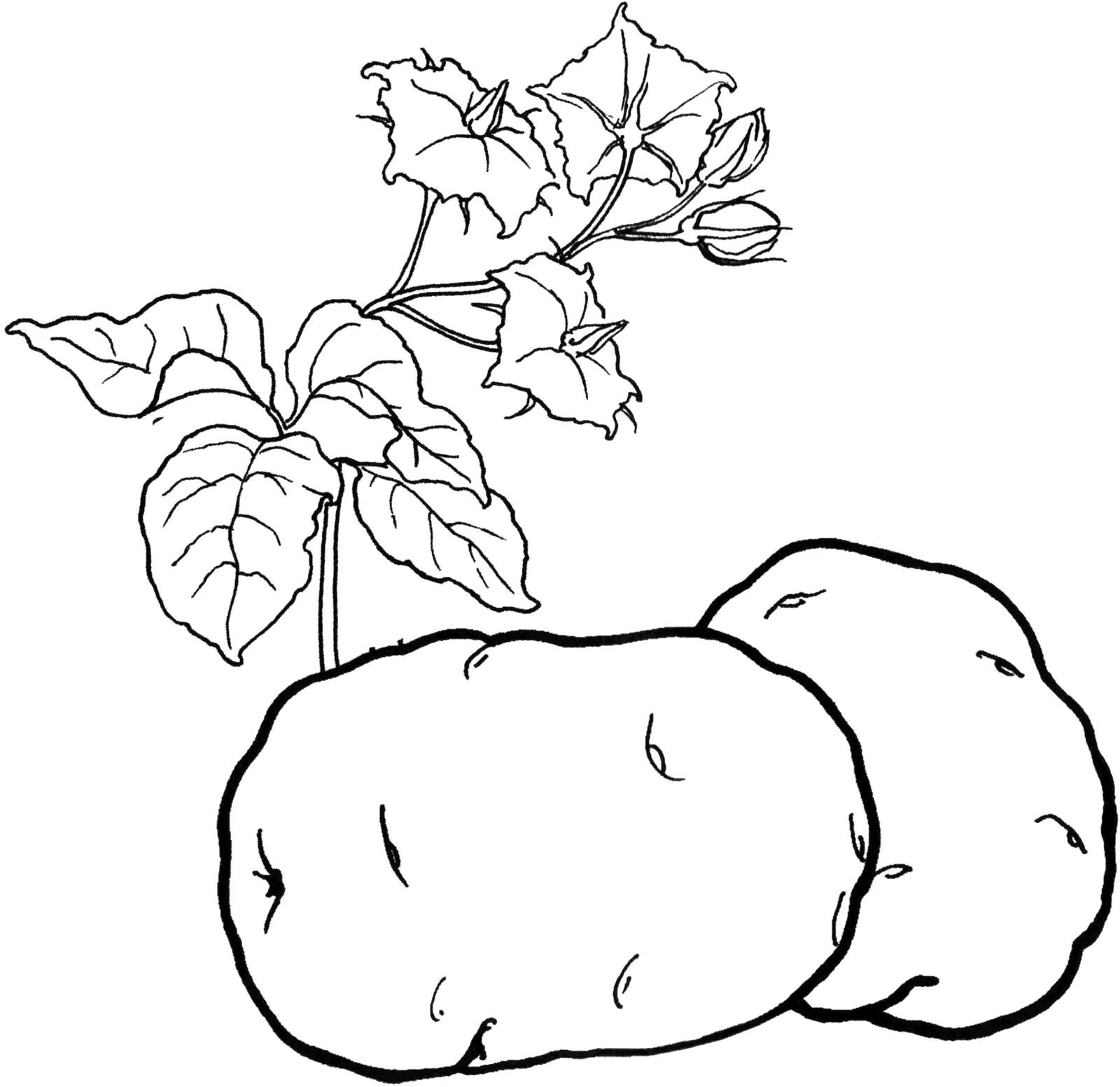 Раскраски овощи, Страница:1.