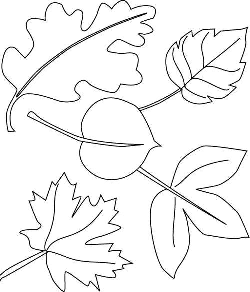 Осенние листья раскраска картинки для оформления