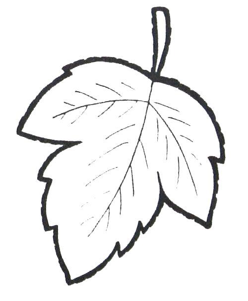 Название: Раскраска Раскраски / Листья деревьев / Лист ... Лист Дерева Раскраска. Категория: растения. Теги: лист.