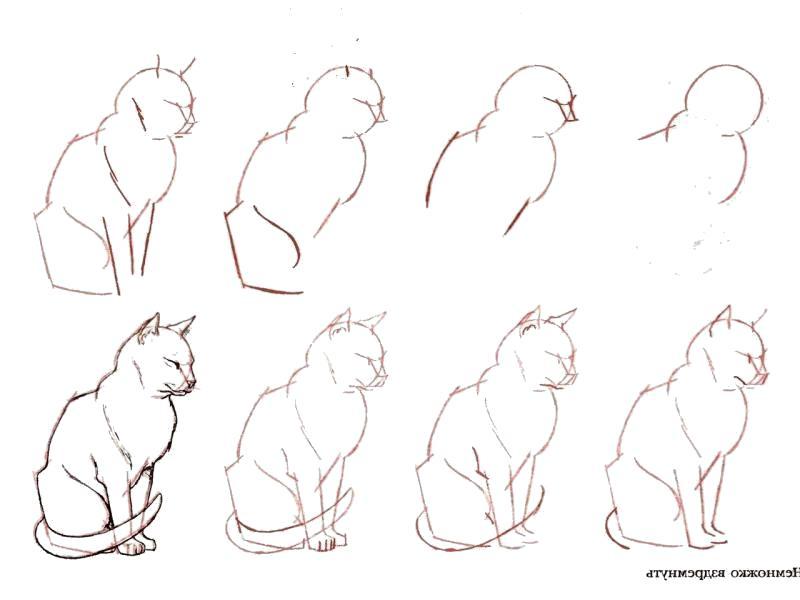 Раскраска Как нарисовать кота поэтапно. Скачать поэтапно.  Распечатать поэтапно