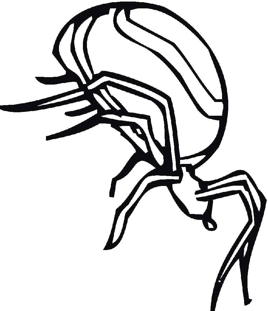 Раскраска паук с большим телом. Насекомые