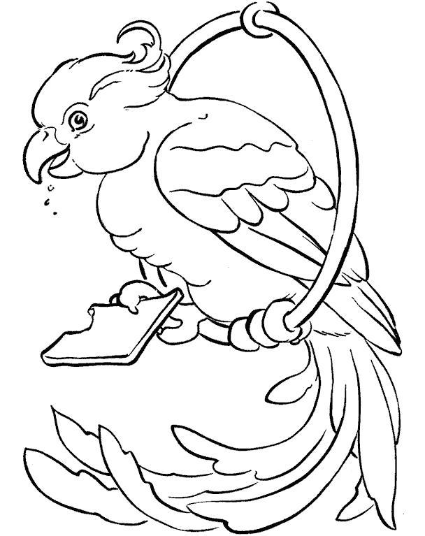 Раскраска . попугай