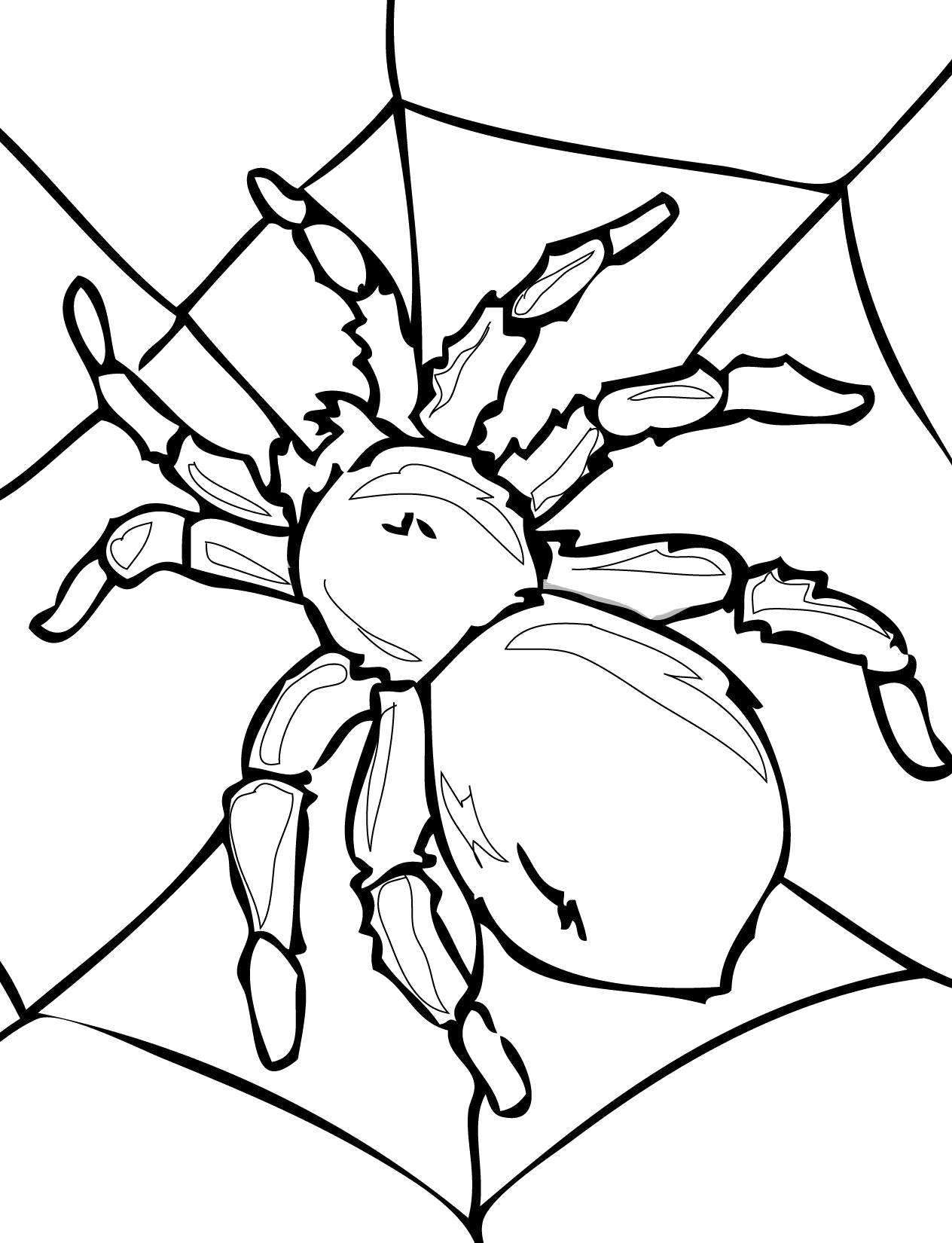 Раскраска паук раскраска. Насекомые