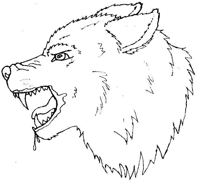 Раскраска голова волка. Скачать волк.  Распечатать волк