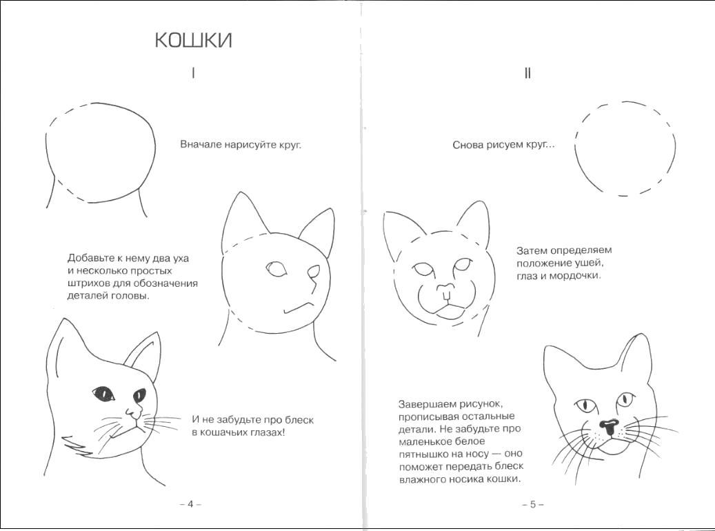 Раскраска поэтапно Как нарисовать кота. Скачать поэтапно.  Распечатать поэтапно