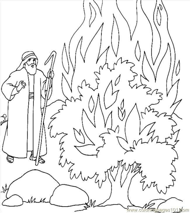 раскраска берегите лес от огня период цветения
