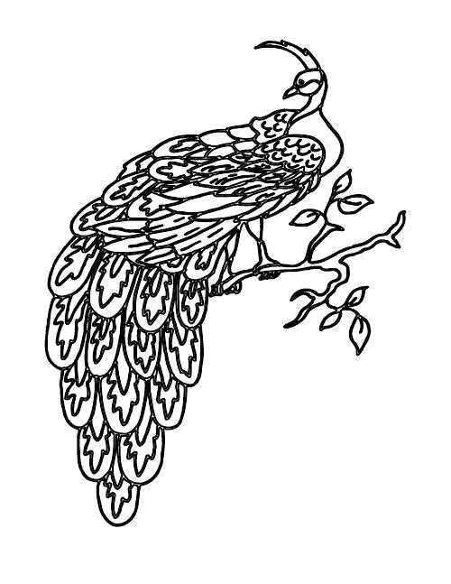 Раскраска Раскраска Павлин на дереве. павлин