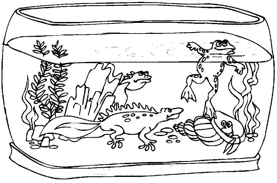 порядок рисунок аквариум с рыбками и водорослями что это началось