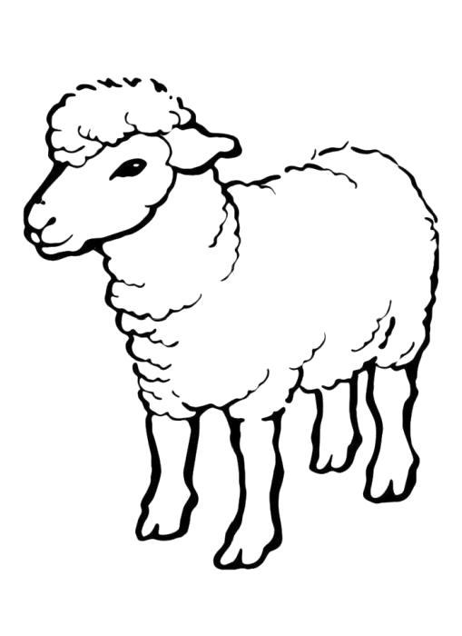 Раскраска Овечка. Овца