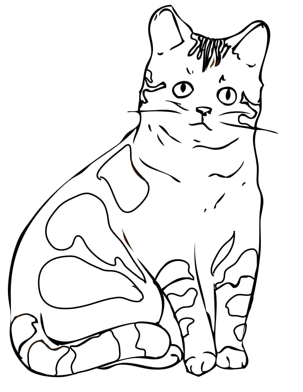 Картинки кошка распечатать