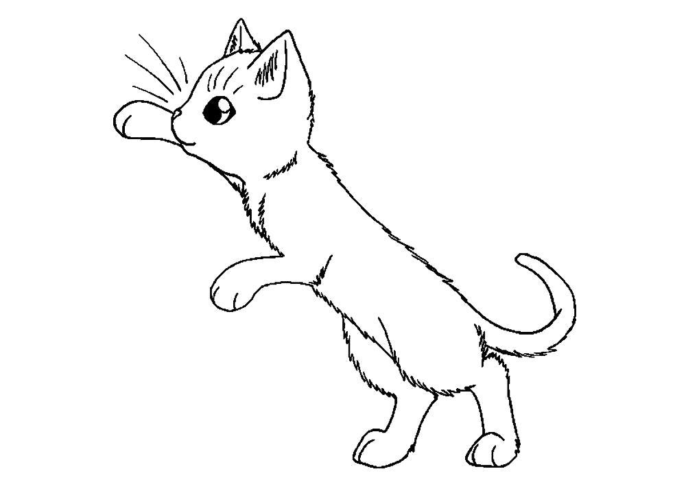 Раскраска  котята. Скачать кошка, кот, Котенок.  Распечатать Домашние животные